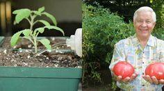 Poliala som sadenice s týmto prípravkom a moje rastliny pustili krásne silné výhonky a začali bujne kvitnúť - Báječné zdravie