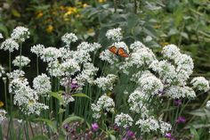 Alliums for All | State-by-State Gardening Web Articles