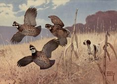 """Art scene """"Flushed"""" by Lynn Bogue Hunt An autumn scene with three quail and a bird/hunting hound dog Mid Century, Unused Some wear and soiling on right back. Quail Hunting, Deer Hunting Tips, Hunting Art, Pheasant Hunting, Hunting Dogs, Grouse Hunting, Hunting Stuff, Turkey Hunting, Wildlife Paintings"""