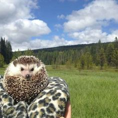 ...leopard-print blankets...   The Fantastic Adventures Of Biddy The Hedgehog