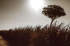 A tree on a reed by FlasheSubversivos