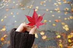 Hand Photography, Perspective Photography, Autumn Photography, Life Is Beautiful, Beautiful Flowers, Aesthetic Roses, View Wallpaper, Islamic Girl, Autumn Nature