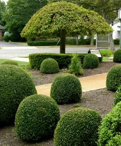 sculpted hedges - Google Search