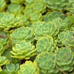Zone 5 Succulents: Tips On Growing Succulents In Zone 5 | New ... Zone Garden Design Succulents Html on