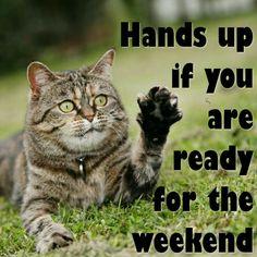 weekend humor, weekend quotes, friday weekend, its friday quotes, Bon Weekend, Weekend Humor, Friday Weekend, Nice Weekend, Wednesday, Friday Quotes Humor, Thursday Quotes, Monday Quotes, Memes Humor