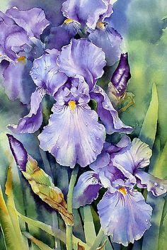 "art by anne mortimer   Dewdrop Irises"" by Ann Mortimer   Redbubble"