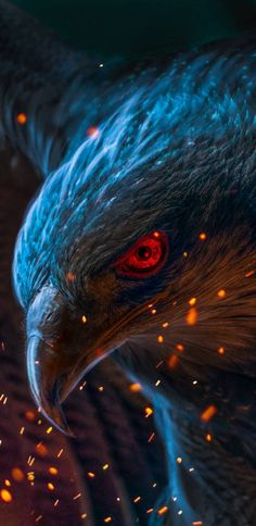 Animals Discover eagle wallpaper for android and ios devices. visit for more tech related content. Cats Wallpaper, Wild Animal Wallpaper, Eagle Wallpaper, Colorful Wallpaper, Nature Wallpaper, Amazing Wallpaper, Wallpaper Wallpapers, Iphone Wallpapers, Eagle Pictures