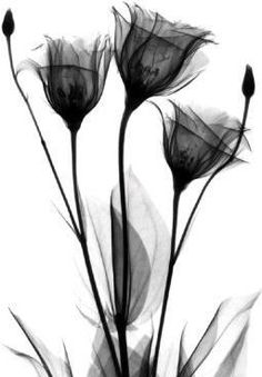 X-ray of a flower