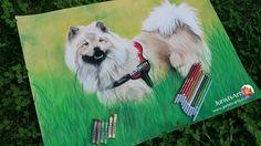 Dog: Eurasier Pastell: Stabilo carbothello + JAXXEL (fine)