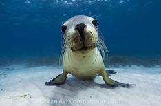 Best Ocean Animal Photos of 2013 : Discovery News