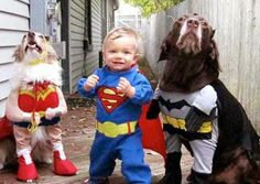 Baby Superman Costume and Two Dogs Dressed Up as Batman and Wonder Woman  ---- funny pictures hilarious jokes meme humor walmart fails