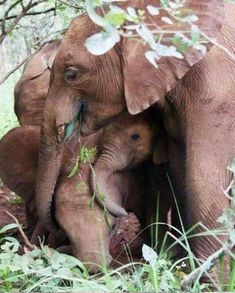 Seriously considering volunteering at this Cambodian Elephant Reserve for my next adventure! Image Elephant, Elephant Love, Elephant Art, African Elephant, Elephant Family, Cute Baby Animals, Animals And Pets, Funny Animals, Beautiful Creatures