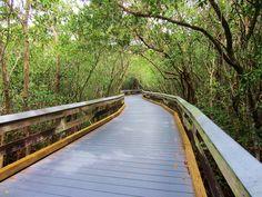 Boardwalk through the mangroves to the beach at Clam Pass - Naples, FL