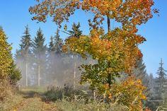 Herbststimmung - Oktober Landscapes, October, Nature
