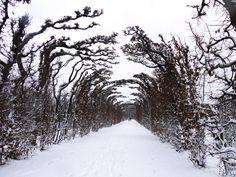 Winter Alley in Schönbrunn Schloß Schönbrunn (c) Kultur- und Betriebsges.m.b.H./Daniela Holzer