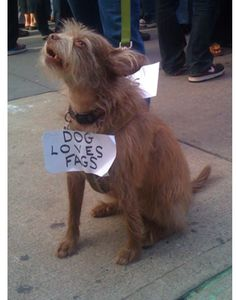 dog loves fags