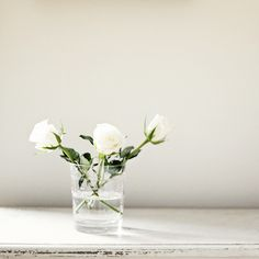 White roses // studio ideas