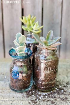 Succulents in recycled jars