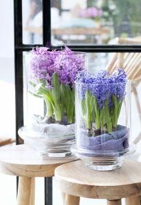 hyacint_in_vaas