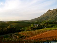 South Africa wine tours by The Wine Experience