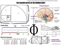 WHAT IS THE GOLDEN RATIO? | Quantum World Awaken Your Mind