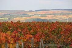 Couleurs automnales - Photographies Patrick Jassiones Champagne, Painting, Art, Grape Vines, Vineyard, Photographs, Landscapes, Colors, Craft Art