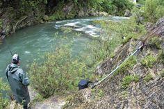 Tras el #salmón en las aguas del río Sella.
