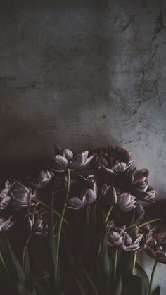 Phone Wallpaper – My Pin Page Nature Iphone Wallpaper, Screen Wallpaper, Phone Backgrounds, Wallpaper Backgrounds, Wallpaper Ideas, Floral Wallpaper Phone, Pretty Phone Wallpaper, Wallpaper Lockscreen, Cellphone Wallpaper