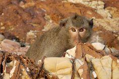 Monkey Island Sattahip, Thailand