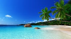 Morze, Plaża, Piasek, Palma, Niebo