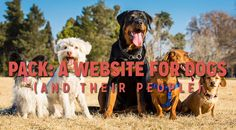 Pack: A Website for Dogs (and their people)