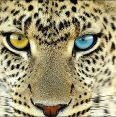 painting of leopard with green eyes - Google Search