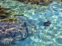 35 tartaruga marinha