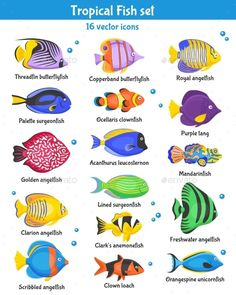 Buy Tropical Fish Icons Set by macrovector on GraphicRiver. Exotic tropical fish icons set with fish species flat isolated vector illustration. Editable EPS and Render in JPG fo. Tropical Fish Store, Tropical Fish Tanks, Tropical Fish Aquarium, Live Aquarium, Planted Aquarium, Fish Illustration, Illustrations, Fish Chart, Beautiful Tropical Fish