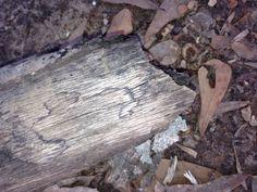 Heart on log