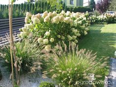 Ogród tosi Green Garden, Herb Garden, Garden Plants, Landscaping With Rocks, Garden Landscaping, Minimalist Garden, Hydrangea Garden, Garden Entrance, Outdoor Spa