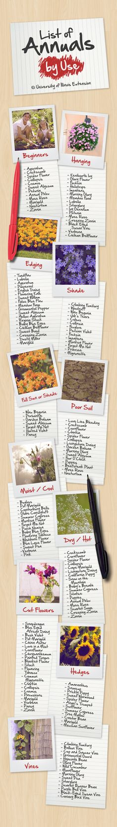 List of Annuals by Use #plants #flower #gardening #resource