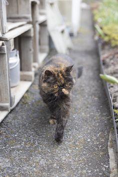 Oravankesäpesä: KORONAVAPPU 2020. Cats, Animals, Gatos, Animales, Animaux, Kitty, Cat, Cats And Kittens, Animal
