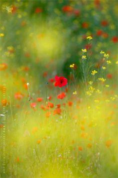 Le Coeur by Roeselien Raimond on 500px