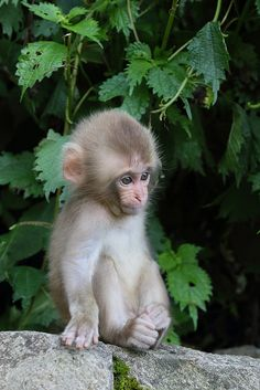 Live your Life — tulipnight: Newborn Baby 2014 by Masashi Mochida. Cute Creatures, Beautiful Creatures, Animals Beautiful, Cute Baby Monkey, Pet Monkey, Cute Little Animals, Cute Funny Animals, Baby Animals Pictures, Animals And Pets