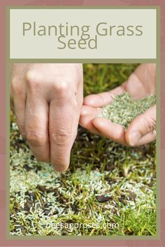 Tips and tricks to planting grass seed correctly. Stop making the same mistakes today and learn the perfect way to plant grass seed now! The ins and outs of planting grass seed. Fall Lawn Care, Lawn Care Tips, Planting Grass Seed, Planting Seeds, Lawn Striping, Lawn Fertilizer, Low Maintenance Landscaping, Growing Plants, Amazing Gardens