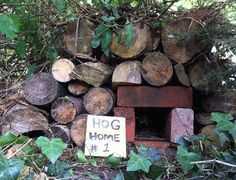 Construct a hedgehog box using recycled garden materials including an old terracotta planter. Eco Garden, Recycled Garden, Garden Fencing, Garden Care, Dream Garden, Diy Hedgehog House, Hedgehog Habitat, Bug Hotel, Fauna