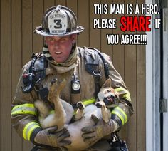 Hero!   All about #cats #dogs #pets Check it out @PetPremium