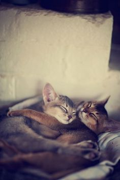 Kitty cuddles - Your Fun Pics
