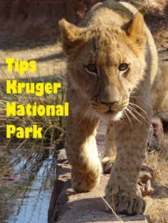 Handige tips en weetjes voor in het Krugerpark.