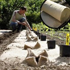 Plantation de Tomates 'Garance', sur toile de jute <br>Jardin d'Avril - E. Brenckle - Rustica