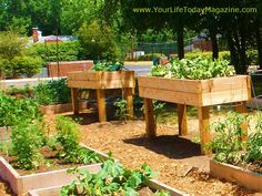 Love the table-height raised garden beds.
