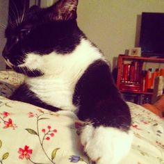 Cute! Bedtime Snuggles with Gertie.  Sometimes you just need a cat to curl up with you in bed.
