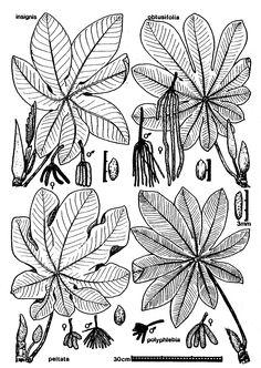 species.line.original.gif (1400×1972)