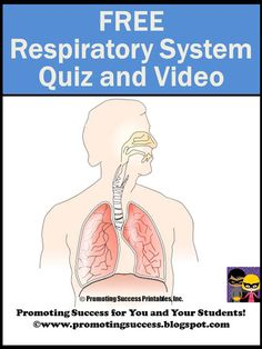 united learning video quiz respiratory system